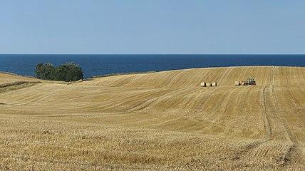 Erntezeit auf dem Dänischen Wohld.jpg