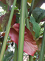 Etlin hemisph 091229-0350 tdp.jpg