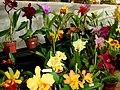 Exposição Nacional de Orquídeas de Catanduva no Colégio Nossa Senhora do Calvário - Colegião - panoramio (1).jpg