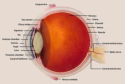 Figure 2. Diagram of the Eye