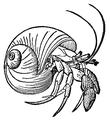 FMIB 52669 Pagurus bernhardus, the hermit-crab-retouched.png