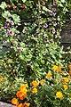 Fall flowers (265927162).jpg