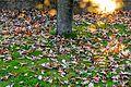 Fallen Leaves-148920.jpg