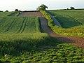 Farmland, Popham - geograph.org.uk - 442881.jpg