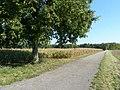 Feldweg bei Linkenheim - geo.hlipp.de - 21653.jpg