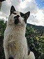 Felino, Gato.jpg