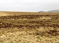 Feral Goat herd at Black Halls - geograph.org.uk - 381633.jpg