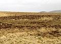 Feral Goat herd at Black Halls - geograph.org.uk - 381633.jpg