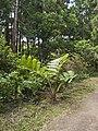 Fern in Mata Jardim Jose do Canto.jpg