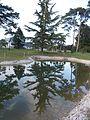 Festetics Palace English landscape park, water reflection of tree, Keszthely, 2016 Hungary.jpg