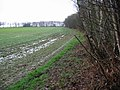 Field boundary to the W of Hackington Road - geograph.org.uk - 751207.jpg
