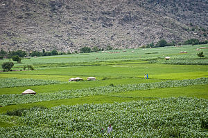 Dara-I-Pech District - Villagers tend their fields in the Pech River Valley, Kunar Province, Afghanistan