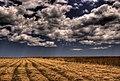 Fields of Gold - Flickr - twoblueday.jpg