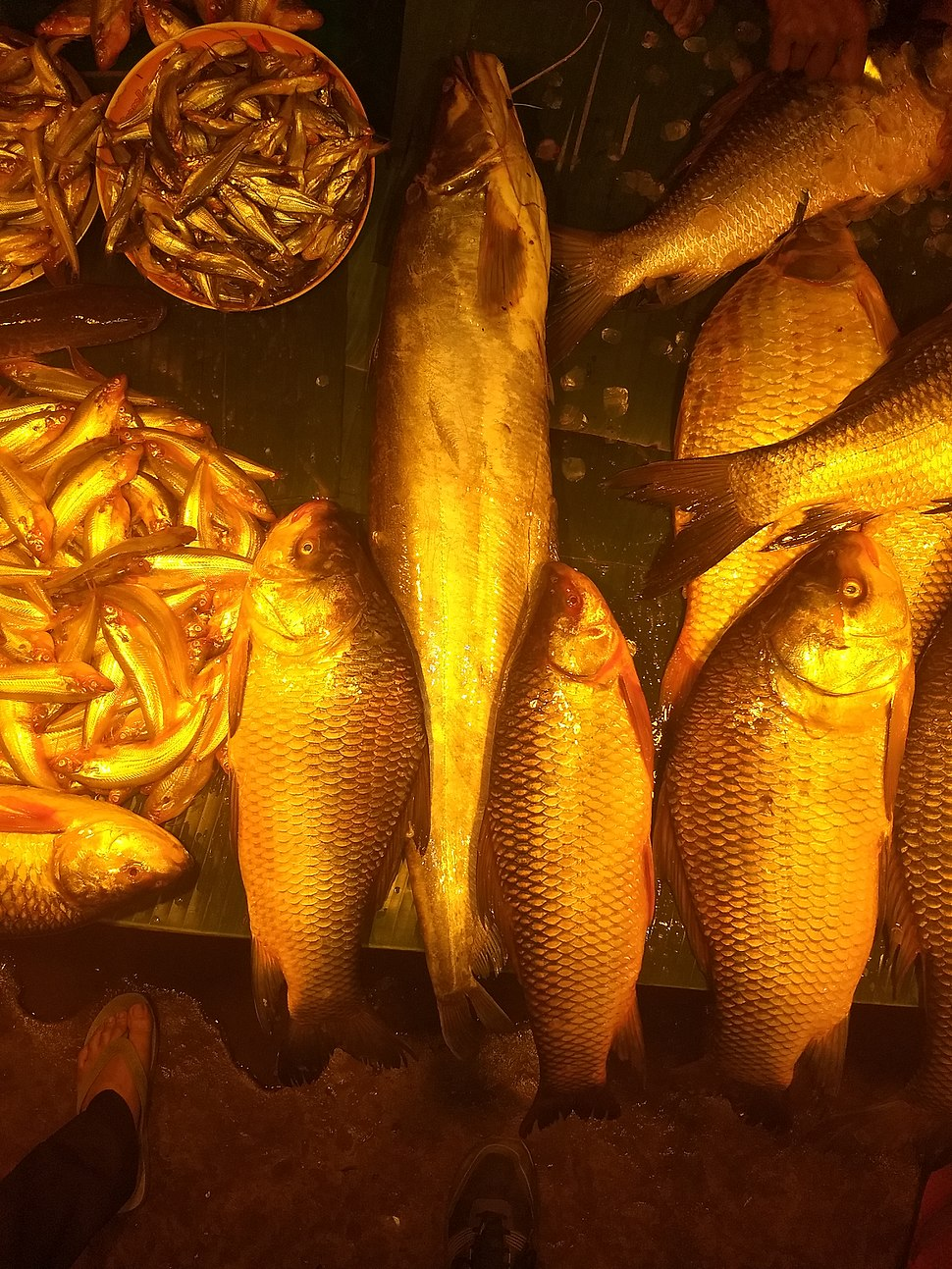 Fish Market of bengali