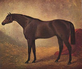 Fisherman (English horse) British-bred Thoroughbred racehorse