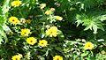 Fleur101.jpg