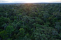 Flickr - ggallice - Rainforest.jpg