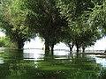 Flood Fight Shots - KC 057 (6130173475).jpg