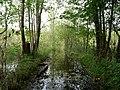 Flooded path in the Teufelsbruch swamp 11.jpg