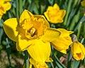 Flower 3437.jpg