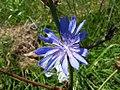 Flower Thursday... (45585146).jpg