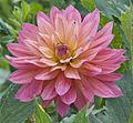 Flower at Nymans Garden (NT) (7137891569).jpg