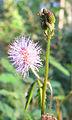 Flowers (151).jpg
