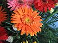 Flowers (24).JPG