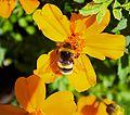 Flowers (9529769187) (3).jpg