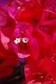 Flowers @ Po Lin Monastery (2037697323).jpg