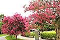 Flowers in AU.jpg
