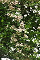 Flowers in Cosmeston Lakes Country Park (4764).jpg
