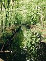 Fluss im Tierpark Wolbeck.jpeg