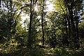 Forêt de Stambruges 17.jpg