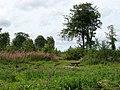 Forêt de Tournehem - panoramio.jpg