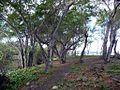 Forêt de létang Saint Paul (3851027420).jpg