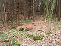 Forest floor - geograph.org.uk - 647596.jpg