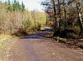 Forestry road, Wyre Forest - geograph.org.uk - 1623566.jpg