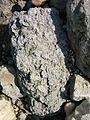 Fossiles aux falaises des Vaches Noires 2.jpg