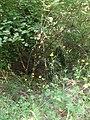 Fosso delle Rolle - panoramio.jpg