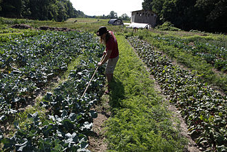 Acorn Community Farm - Four acres under cultivation