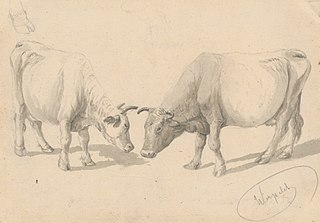 Study of Cows