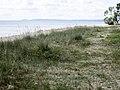 Friseboda naturreservat, stranden.jpg