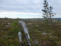 Fulufjellet nasjonalpark 005.JPG