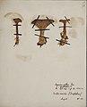 Fungi agaricus seriesI 058.jpg