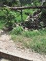 Furesa (Fundación Refugio Salvaje) Jayaque - panoramio (3).jpg