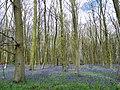 GOC Watton-at-Stone 007 Hazeldell Wood, Watton-at-Stone (26884701274).jpg