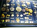 Gamagory shell museum2 2004.jpg