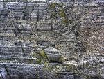 Ganet nesting (8045684775).jpg