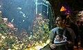 Ganjnameh Cave Aquarium, Nowruz 2018 ( 13970104000148636574826053605022 42333).jpg